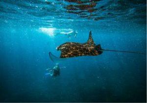 duiken en snorkelen nusa lembongan