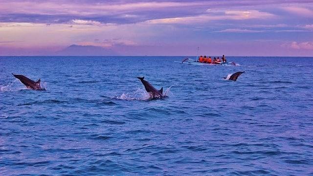 Dolfijnen spotten in Lovina