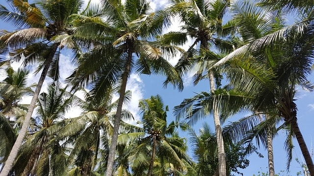 Palmbomen op strand bij Nusa Lembongan